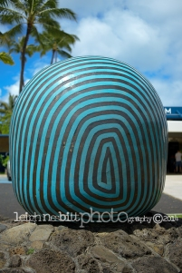 Honolulu Aquarium Photography
