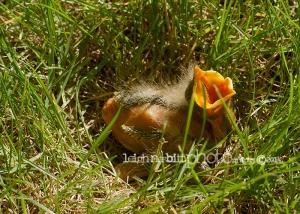 Manitoba Nature Photographer