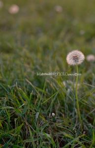 Manitoba Photography